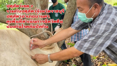 ปศุสัตว์เขต 7 ร่วมกับปศุสัตว์จังหวัด ปศุสัตว์อำเภอบ้านคา และหนวย HHU ราชบุรี ลงพื้นที่ดำเนินการฉีดวัคซีนป้องกันโรคลัมปิสกิน
